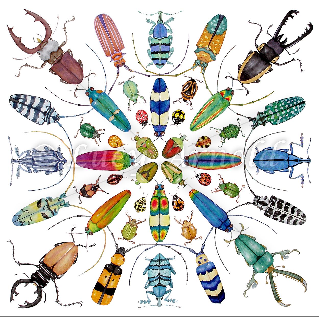 Beautiful-Beetles-WM